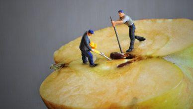 pestki jabłek