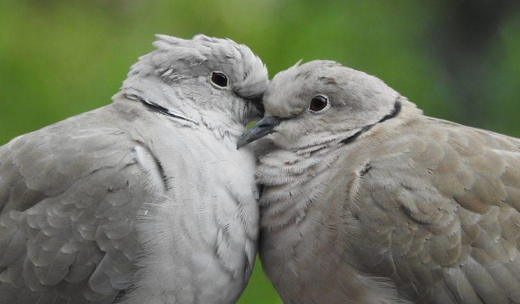 homoseksualizm zwierzęta