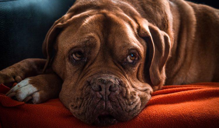wiek psa na ludzkie