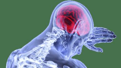 wielkość mózgu