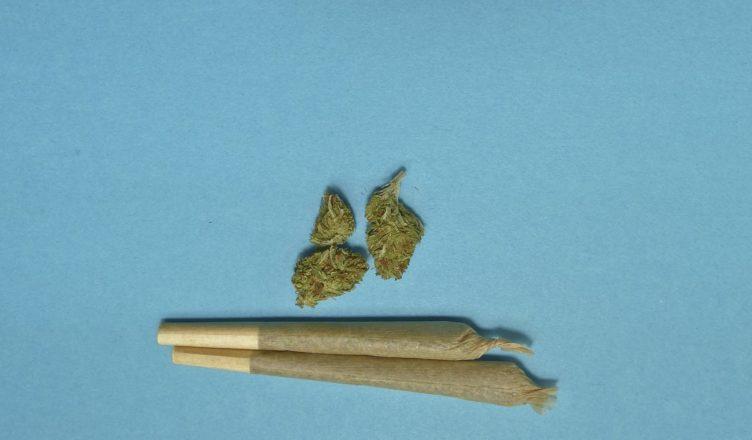 minister zdrowia marihuana
