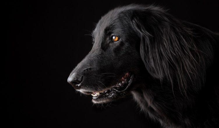 pies a zdrowie